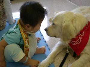 ベイリーと見つめ合う小児患者(SOK提供)