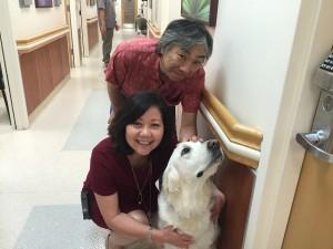 ヨギのお兄ちゃん「ヨダ」(写真)は米クイーンズメディカルセンターで勤務(前の女性はハンドラーのPat Inada氏)。ヨダはGHCのアキよしかわ(写真)が闘病中(詳細はこちら)、ファシリティドッグとして癒やしと安らぎを与えてくれました。